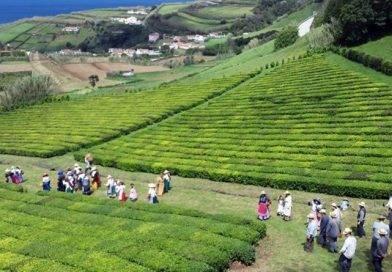 Trajo de Apanhadores de Chá (par) – Açores