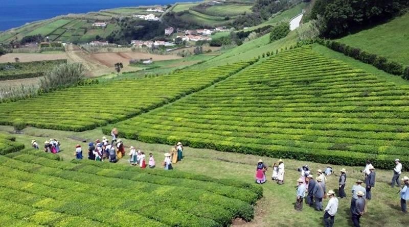 Trajes de apanhadores de chá - Açores