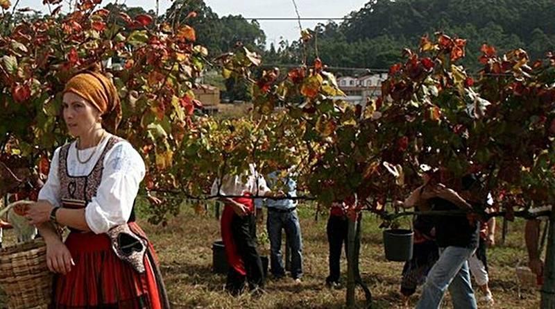 A vinha e os vinhos verdes na região da Ribeira-Lima