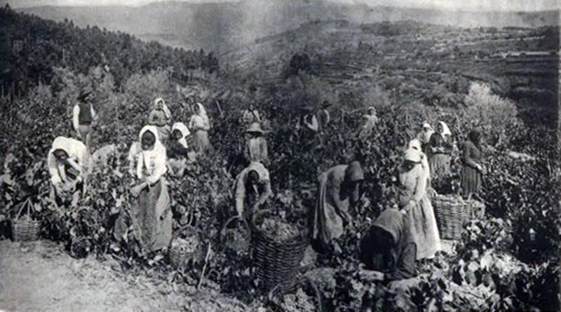 Vinho do Porto - Vindimas na região do Douro