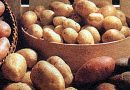 Batatas amigas, que vieram do Peru!
