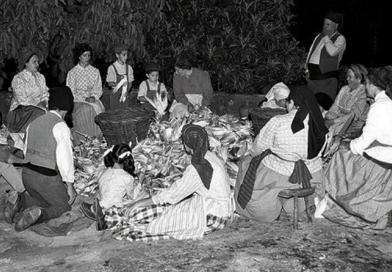 O Folclore e a divisão social do trabalho | Textos e opiniões