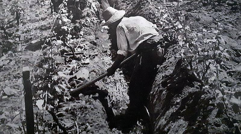 A cava na região do Douro