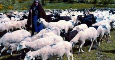Uma vezeira no Barroso (Gralhas) - Trás-os-Montes