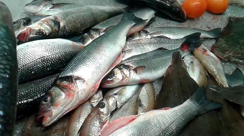 O sável é um peixe marítimo já apreciado pelos Romanos