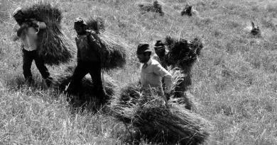 As acarrejas era o transporte do cereal, depois de ceifado, do campo para as eiras, para aí ser malhado.