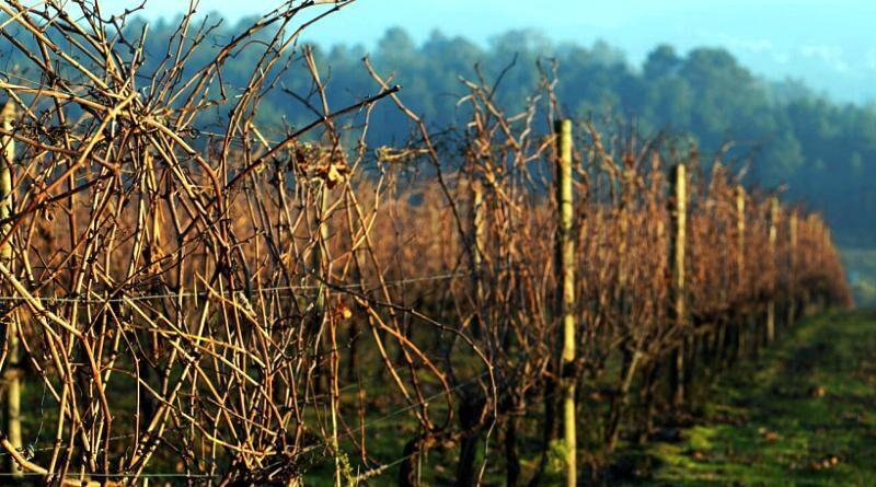 Vinhos de Valpaços