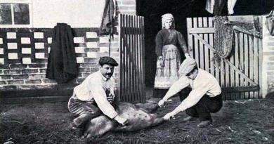 A matança do porco é em Dezembro e Janeiro