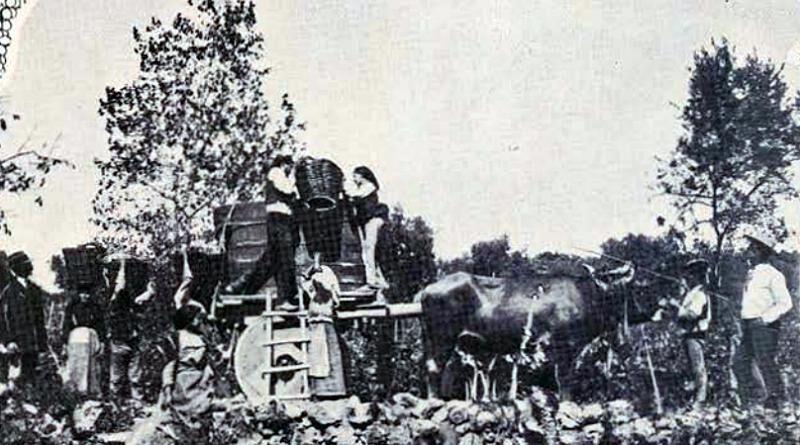 Os trabalhos da vindima (Bucelas - 1914)