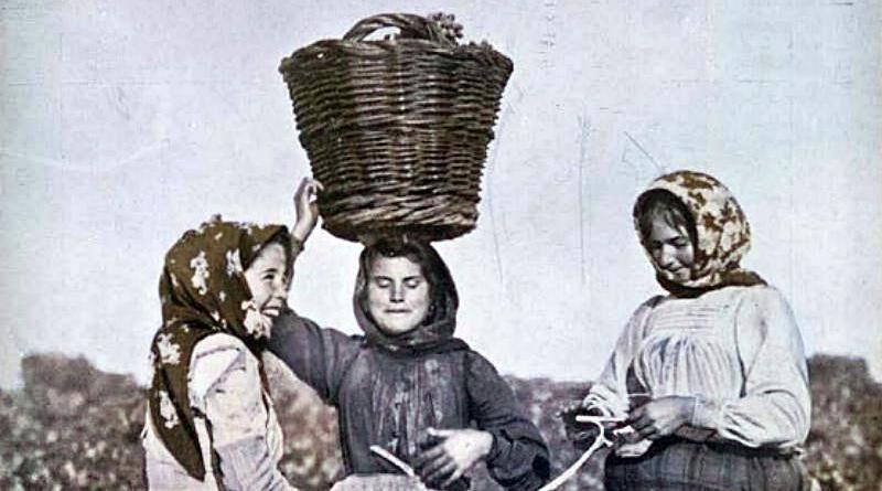 Vindimadoras - É hora da vindima em terras ribatejanas (1911)